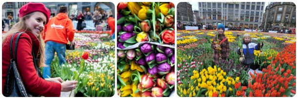 National Tulip Day-mix